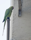 My morning visitor.jpg