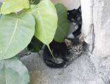 Kittens hiding.jpg