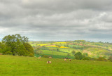 Herefordshire view.