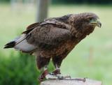 Hawk.(type unknown)