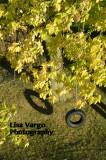 Fall Tire Swing