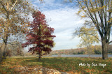 Fall day at the River 2.jpg