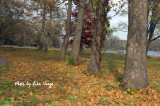 Fall Ground.jpg