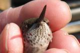 Marie Prentice bird