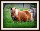 Pony Bangs
