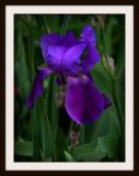 Loving The Purple