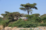 Parts of Somaliland are surprisingly green