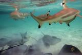 Bora Bora - Snorkling
