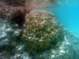 TahitiOct13 3240.jpg
