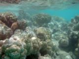 TahitiOct13 3243.jpg
