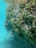 TahitiOct13 3252.jpg