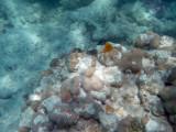 TahitiOct13 3259.jpg