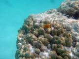 TahitiOct13 3271.jpg