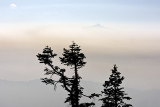 Two Tree Silhouette w Buttes Above Smoke Inversion
