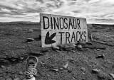 Dino Tracks and Tracker