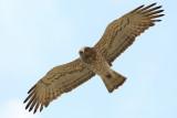 Birds in Israel