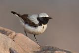 Birds in Morocco