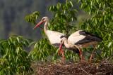 Storks, Gannet , Cormorants, Pelicans, Herons, Ibis, Spoonbill.