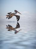 Pelican in flight using flood filter