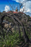 Barrenjoey lighthouse with burnt tree portrait version