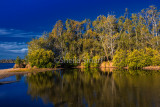 Tree reflection at Narrabeen
