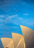 Sacred ibis and Sydney Opera House