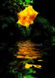 Hibiscus reflection