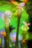 Flowers in Botanic Gardens pond