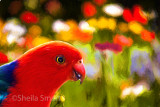 Flowers and king parrot