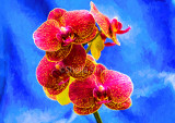 Phalaenopsis orchid or moth orchid