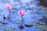 Water lilies in Monet's Garden.
