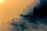 Mist at Lake Matheson