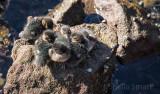 Ducklings on rock