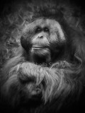 Animals and plants in black and white