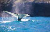 Humpback whale impressionist version
