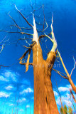 Dead gum tree - painterly