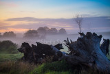 Morning mist at Berry with dead tree in foreground