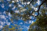 Trees and sky in Australian bush