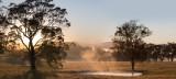 Mist and trees at Villa Medici
