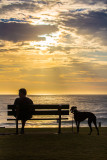 Silhouette of man sitting on seat with greyhound at sunrise