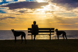 Man with greyhounds at Palm Beach sunrise