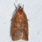 0957 - Dotted Leaftier Moth - Psilocorsis reflexella