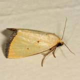 9044 -  Black-bordered Lemon Moth - Marimatha nigrofimbria