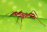 Yucatan Ants 2013