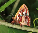 Yucatan Bugs 2013