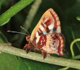 Yucatan Butterflies 2013