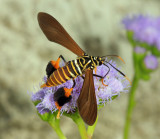 Yucatan Moths 2013