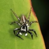 Yucatan Spiders 2013