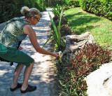 Julie feeding a Black Iguana