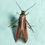 2507 - Schreckensteinia erythriella